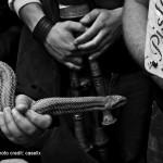 Die Feier des heiligen Dominiks - Schlangen Cocullo